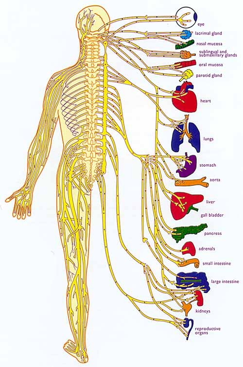 natural-results-chiropractic-adjustment